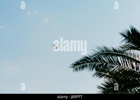 Plane in the sky. Shooted from the ground. Flying over the palm tree. - Stock Photo
