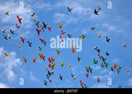 Colorful pigeons flying, Molokai, Hawaii, USA - Stock Photo