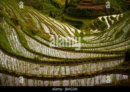 china, rice, backbone, terrace, beautiful, beauteously, nice, travel, culture, - Stock Photo