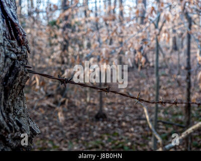 View of Barb Wire Fence in in the Forest - Stock Photo