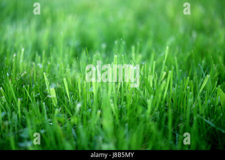 Photo of a bright green grass on a meadow - Stock Photo