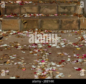 Colorful rose petals scattered on steps an a paved walkway - Stock Photo