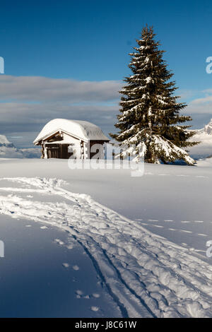 Small Hut and Fir Tree on the Top of the Mountain in French Alps - Stock Photo