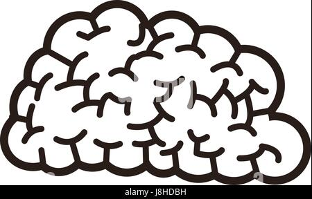 human brain think creativity image - Stock Photo