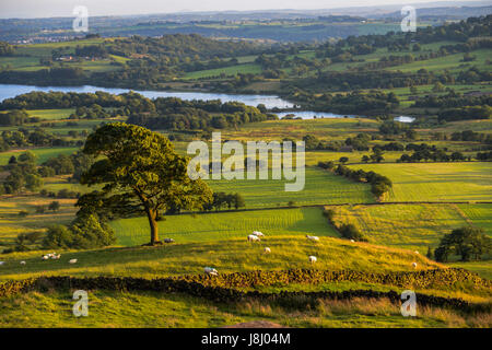 View towards Tittesworth Reservoir from The Roaches ridge in the Staffordshire Peak District taken in the golden - Stock Photo