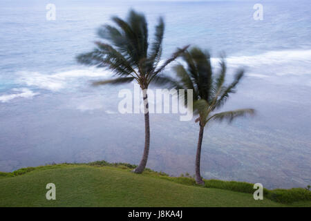Palm trees blowing in a strong wind - Stock Photo