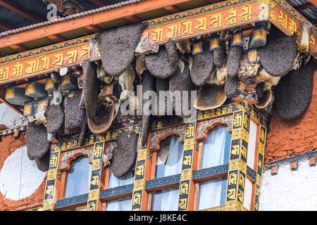 Honey combs hanging above the windows of Punakha Dzong, Bhutan. - Stock Photo