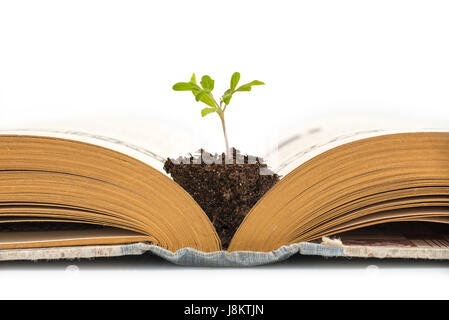 Plant growing from an old opened book,  isolated on white background, education or recycling concept - Stock Photo