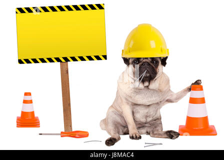 pug dog with yellow constructor worker safety helmet and cone, plus warning sign on wooden pole, isolated on white - Stock Photo