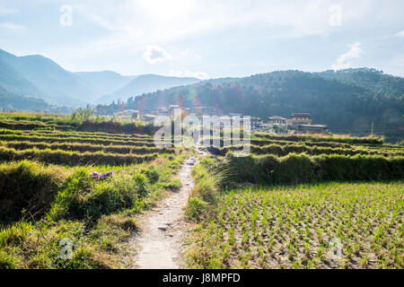 Punakha valley is filled with fertile farmlands. The district is one of Bhutan's largest rice cultivation areas. - Stock Photo