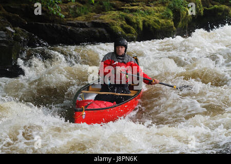Male canoeist in a Canadian open canoe shooting the rapids at the Serpents Tail near the Chain Bridge on the River - Stock Photo