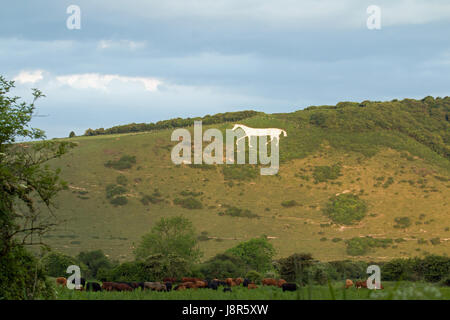 Litlington White Horse in May 2017. Chalk downland figure on South Downs on Hindover Hill. - Stock Photo
