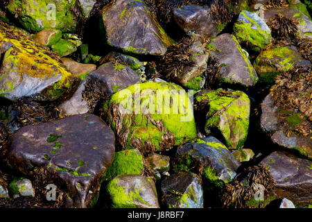 Abstract of coastal rocks covered in seaweed - Stock Photo