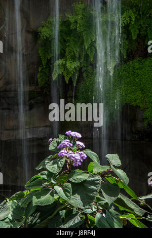 Waterfalls in a water feature at at RHS Wisley - Stock Photo