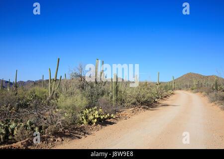 Cacti and desert plants at Saguaro National Park in Arizona - Stock Photo