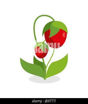 Red strawberries with green stems. Juicy Berry with leaves on a white background. Vector illustration of a garden - Stock Photo