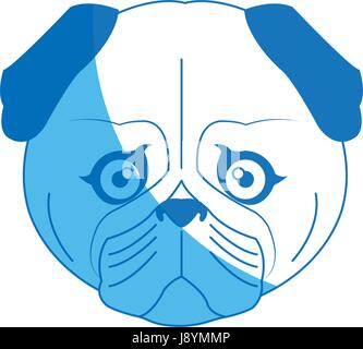 cute face dog pug pet aminal image - Stock Photo