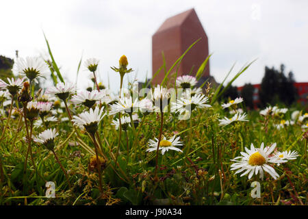 meadow with daisies in front of a red tower building - Stock Photo