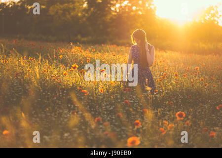 Woman at poppy field in summer sunset - Stock Photo