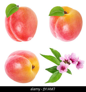 Apricot and apricot flower on white background (isolated). - Stock Photo