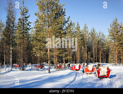 People at Reindeer sledge caravan safari in winter forest in Rovaniemi, Finnish Lapland - Stock Photo