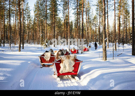 People at Reindeer sleigh caravan safari in winter forest in Rovaniemi, Finnish Lapland - Stock Photo