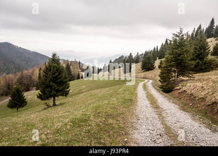 mountain meadow with isolated trees and dirty road near sedlo Prislop mountain pass in Velka Fatra mountains in - Stock Photo
