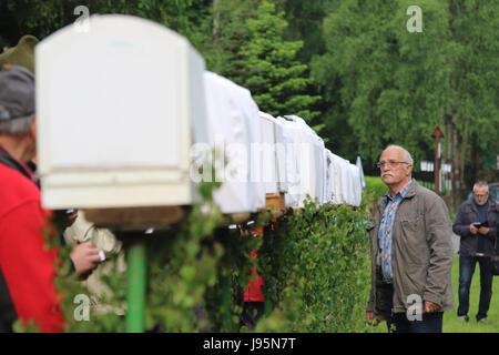 Benneckenstein, Germany. 5th June, 2017. A visitor looks at cages covered in white cloth housing chaffinches in - Stock Photo