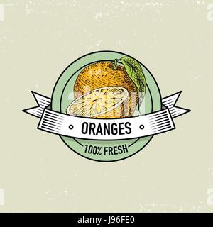 Orange Vintage, hand drawn fresh fruits background, summer plants, vegetarian and organic citrus and other, engraved. - Stock Photo