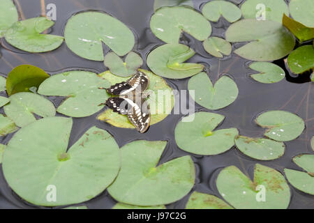 Butterfly in a Glasshouse - Stock Photo