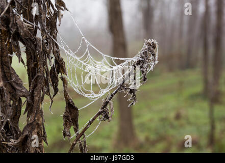 Frozen spider web covered with frost early in the morning - Stock Photo