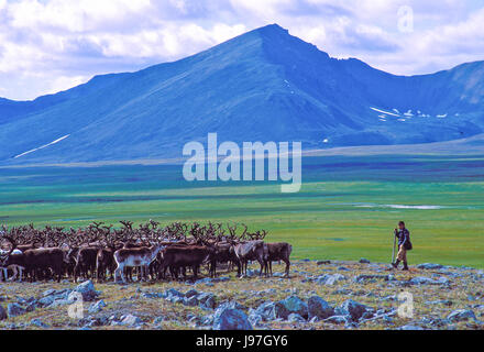 Nomadic Chukchi reindeer herders' encampment on the Chukchi or Chukotka Peninsula, in the Russian Far East. Boy - Stock Photo