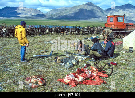 Preparing to roast a reindeer for guests at a nomadic Chukchi reindeer herders' yurt encampment on the Chukchi or - Stock Photo