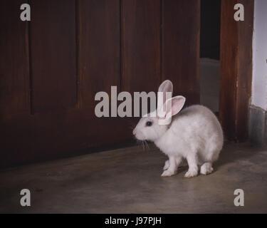Bunny - Stock Photo