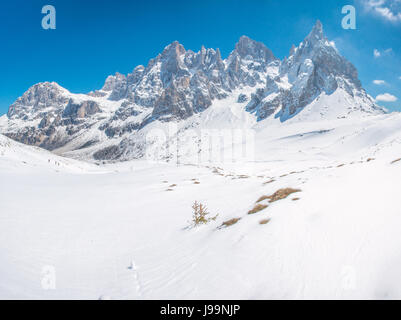 Fresh powder, snow on the Italian Alps, Pale di San Martino. Tracks in the snow from hikers and skiers, dwarf, stunted - Stock Photo