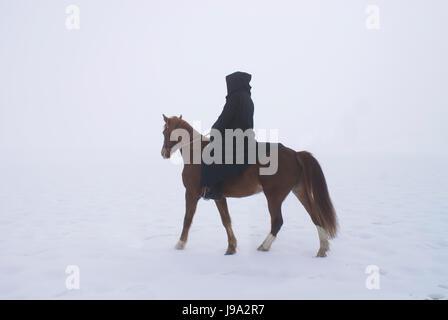 woman, horse, winter, fog, rider, equestrian, snow, woman, tree, ride, horse,