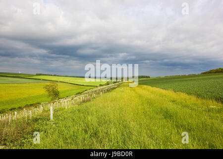 yorkshire wolds meadows and wheat fields with hills and hedgerows under a stormy sky in summer - Stock Photo