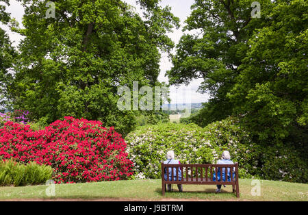 Two ladies sat on a wooden bench admiring the view from Bowood Rhododendron Gardens, Calne, Wiltshire, UK - Stock Photo