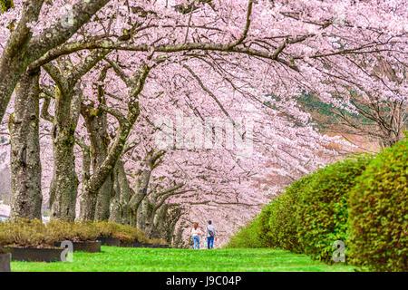 Fuji Reien Cemetery, Shizuoka, Japan in spring. - Stock Photo