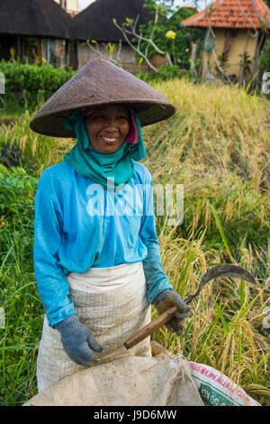 Local woman working in the rice paddies, Ubud, Bali, Indonesia, Southeast Asia, Asia - Stock Photo