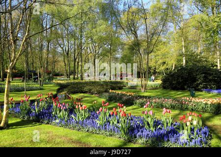 Keukenhof near Lisse, South Holland, Netherlands, Europe - Stock Photo