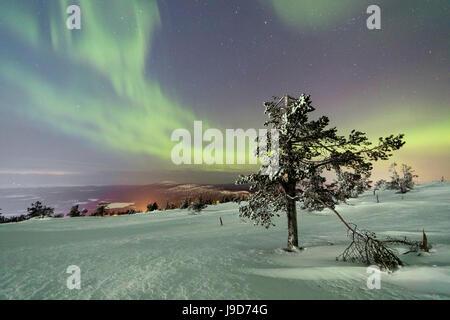 Northern Lights (Aurora Borealis) and starry sky on the snowy landscape and the frozen trees, Levi, Sirkka, Kittila, - Stock Photo