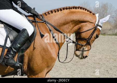 Head-shot of a show jumper horse during training with unidentified rider - Stock Photo