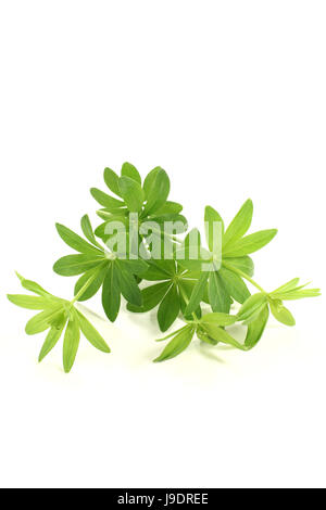 flavour, taste, smell, woodruff, herbs, spice, green, alcohol, spring, flavour,