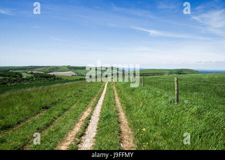 Chanctonbury Ring and Wolstonbury Hill seen from a trail on the South Downs in West Sussex - Stock Photo