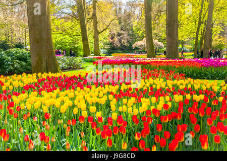 Keukemhof Romantic Blooming Gardens Landscape Lisse Netherland Stock ...