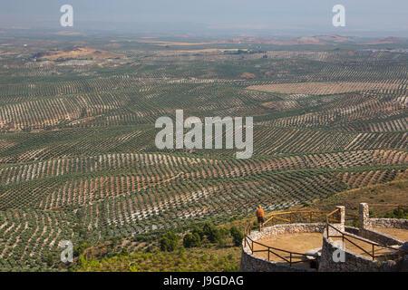 Spain, Andalucia Region, Jaen Province, Olive trees fields near Ubeda City, - Stock Photo