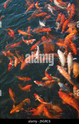 A pond imperial citadel hue unesco world heritage site for Ornamental koi