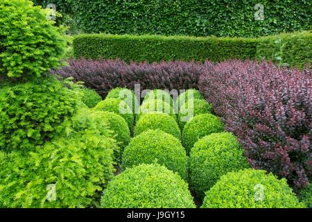 Box globes;yew;hornbeam and purple Berberis hedging - Stock Photo