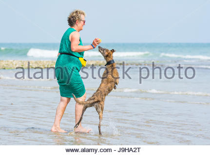 Woman playing with a Scottish Deerhound Lurcher dog on a beach on a hot day in Summer in the UK. - Stock Photo